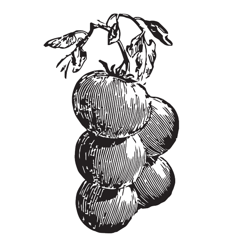 draw-vegetables-03