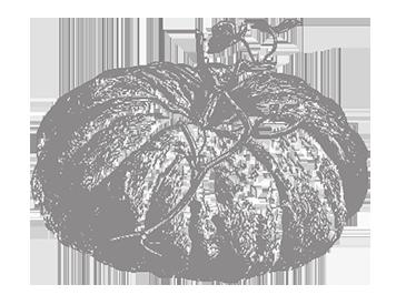 lalongarola-zucca-chiara