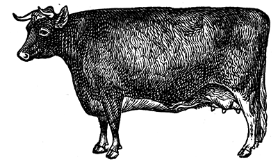 lalongarola-manza